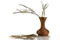 Branches sèches d'un mélèze image libre de droits