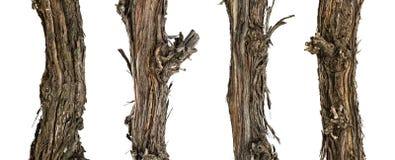 Branches sèches de collection de la vigne photos libres de droits