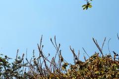 Branches s'élevant sur un toit images stock