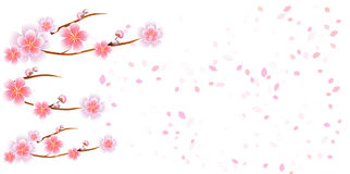 Branches of Sakura and petals flying isolated on white background. Apple-tree flowers. Cherry blossom. Vector EPS 10, cmyk.  Royalty Free Illustration