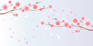 Branches of Sakura and petals flying  on light blue purple background. Apple-tree flowers. Cherry blossom. Vector EPS 10 Stock Images