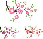 Branches of sakura. Royalty Free Stock Images