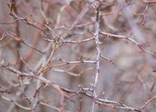 Branches sans feuilles Image libre de droits
