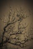 Branches - sepia tone Stock Photos