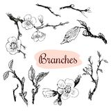Branches Royalty Free Stock Photos