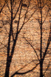 Branches shadows on the brick wall Royalty Free Stock Images