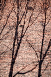 Branches shadows on the brick wall Stock Photos
