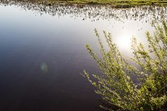 Branches of a shrubbery with young green leaves on the background of a blue pond, a reflection of the sun in the water Stock Photos