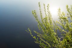 Branches of a shrubbery with young green leaves on the background of a blue pond, a reflection of the sun in the water. Spring evening time, nature background Royalty Free Stock Photography