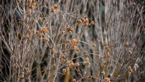 Branches of shrubs and trees. curly, withered sticks. texture background stock photo