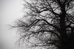 Branches silhouette Stock Photo