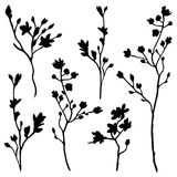 Branches silhouette set Royalty Free Stock Photo