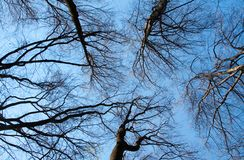 Branches silhouettes on blue sky Royalty Free Stock Photo