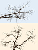 Branches silhouettes Stock Image