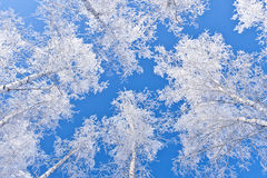 Branches in silver Royalty Free Stock Images