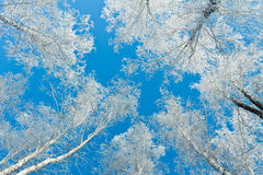 Branches in silver Stock Photo
