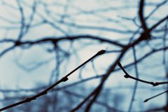 Branches and sky Royalty Free Stock Images