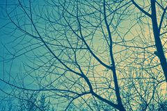 Branches and sky Royalty Free Stock Image
