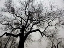 Branches in the sky. Branches of tree in winter, barren and empty stock image
