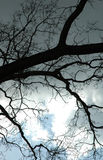 Branches in the sky. Sun fighting to get through the overcast sky stock photography