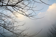 Branches on the sky Royalty Free Stock Photo
