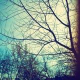 branches skyen Royaltyfria Foton