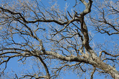 branches skyen Arkivfoton