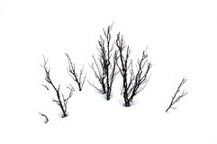 Branches in snow Royalty Free Stock Photography