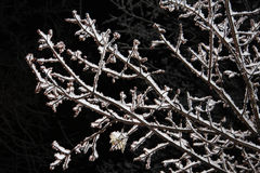 Branches with Snow Stock Image
