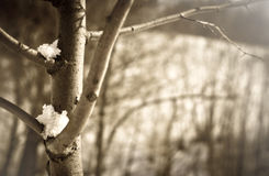 Branches with snow. Spring sunny day Stock Photography