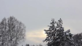 Branches in the snow stock video footage