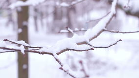 Branches in the snow. Winter forest. A lot of snow on the trees. Winter season stock video footage