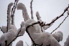 Branches sous la neige un jour d'hiver image libre de droits