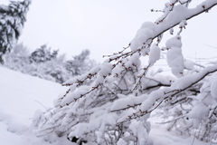 Branches sous la neige un jour d'hiver Photos stock