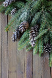 Branches of spruce and pine cones Stock Image