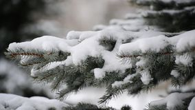The branches of spruce in  snow in at park. The branches of spruce in the snow in the park stock video footage