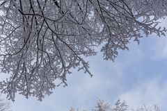 Branches of spruce tree with white snow. Winter spruce trees in the frost.Layer of snow on branches of spruce with hoar-frost. Fir-tree branches of conifer tree stock image