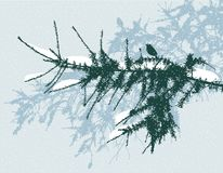 Branches of the spruce trees in snowy day. Vector image of the branches of the fir trees in winter Stock Image