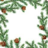 Branches of spruce watercolor on white background. Branches of pine watercolor on white background. Cones of pine. A coniferous forest. Christmas tree. Spruce Royalty Free Stock Photo
