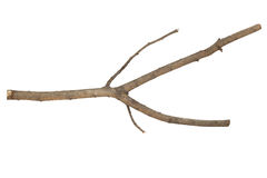 Branches Sticks Stock Image