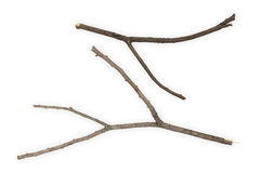 Branches Sticks. Macro branches isolated on white background Royalty Free Stock Images