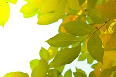Branches in sunlight Stock Photography