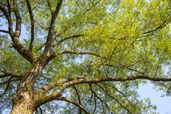 Branches with sunshine Royalty Free Stock Photo