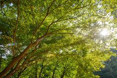 Branches with sunshine Stock Photography