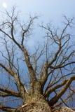 Branches sur le ciel Photos libres de droits