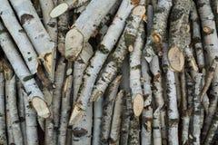 Branches sur le pille Image libre de droits