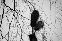 Branches sur un ciel blanc Images libres de droits
