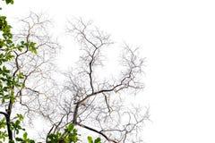 Branches sur un fond blanc Images stock