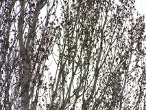 Branches sway stock video