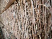 Branches texture Stock Photos